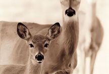 Deer, and others...