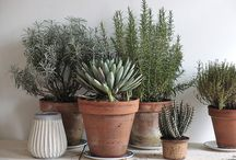 Interiors and Gardening / by Filipe Vetter