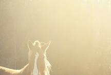 Horses / by Brenda Sprague