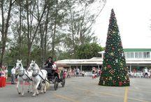 Decoração de Natal / Trabalhos realizados pela EG. Fotos: Eduardo Guerra