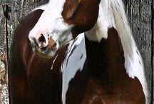 Horse / by Grace Eckert