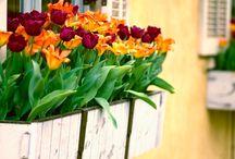 Frühling auf Balkon & Terrasse / Es geht wieder los. Ab nach draußen und den Frühling auf den Balkon und die Terrasse holen.
