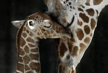 God's Creatures...so precious / by Amber Ivie