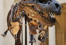 Paleontology/dinossauros