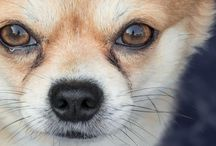 Pet Tips / Explore our tips and advice for every aspect of your dog's care and enjoy the benefits