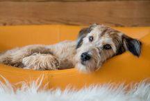 Schöne Hundeschlafplätze