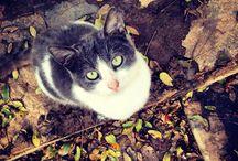 ilovemycats / Cats