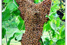 Bee / Bier og slikt