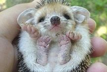Cute baby animals / by Angie Janssen