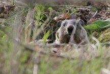 Wild animal control and deterrents