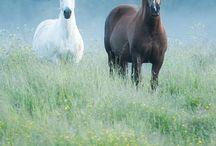 Koně / Tato navštívenka se týká o jízdě na koních