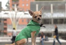 Essential Pet Fashion / Moda, Cani, Pet, Chihuahua, Fashion,  Milano, Italia
