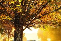 Golden days in autumn  / Autumn trees in dorrigo beautiful place to visit