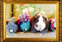 Guinea Pig Fashion / Knitted sweaters for guinea pigs!