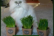 Whisker Greens Pet Grass / Freshly grown pet grass delivered to your door.  #PetGrass