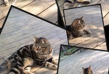 My Cat Icarus!!