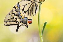 Motyle, ważki