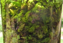 Herbs / by Richard Ruben