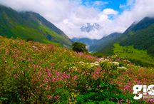 Valley of Flowers Trek / The Valley of Flowers is a world heritage site and a part of the famous Nanda Devi Biosphere. This national park in the far interiors of Garhwal Himalayas (Uttarakhand) is spread over 87.5 sq. Kms. This hidden jewel is a truly unique habitat, home to many endemic varieties of alpine flowers and plants. This valley is at an altitude of 3250 m and above.....So Get away from the crowds and enjoy the Valley of Flowers trek with GIO Adventures.  http://www.gio.in