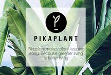 Pikaplant / A plant-rich environment makes people more creative, more productive, and reduces stress. Some plants also help regulate air humidity and remove trace toxins from the air. Plants are good for people. That's why we're making it easier for you to grow herbs, crops, and beautiful plants anywhere. Our products mimic nature to water your plants for healthier plants without waisting water. Because greener living is better living
