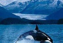 Dolphin Orca Shark & Ocean / by Dorothéa Jordan