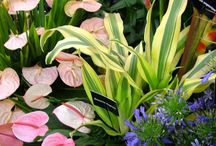 Tropical Garden Plants / Ideas for colourful tropical plants which work together.