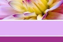 dream colours fuchia purple