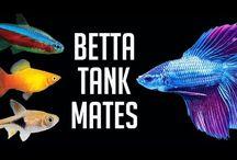 Fighter tank mates