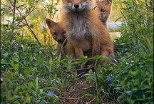 Kit Fox Commission