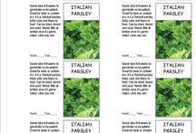DIY seed saving envelopes