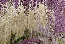 Flora y mis jardines