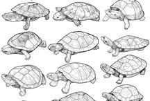 Animals-Reptiles