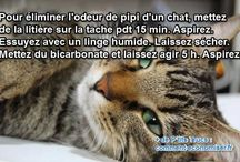 Hygiène des chats