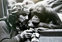 Animal love / monkey business and horsing around,