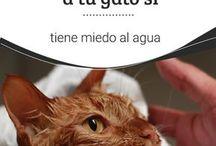 consejos gatos