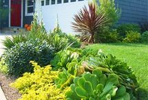 Landscape Ideas for my front yard