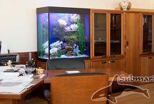 Субмарина аквариумный салон / Субмарина аквариумный салон - оформление аквариумов внутренний и внешний дизайн и обслуживание аквариумов на дому и в офисе  — Качественное оформление аквариумов  — Профессиональное обслуживание аквариумов  http://submarina.su/