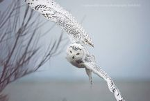 Animals: Owl