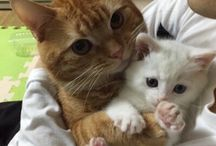 cats ✨