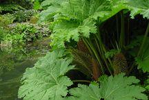 Bog garden ideas