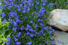 Flowering semi shade plants