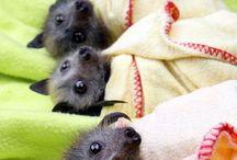 Morcegos bebês