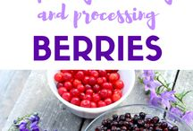 Easy Fruit Recipes / The best dessert recipes, pies, cakes, tarts, muffins, cupcakes and more that use fruit.  Cherries, Saskatoon berries, Haskaps, Raspberries, Strawberries, and more!
