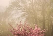 幻想的な風景・森