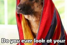 Pet pictures / Great pet pictures