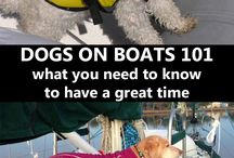 Boating with Pets