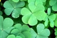 History of St Patricks Day