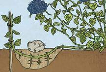 Gardening / pruning tips / by Tricia Strzepek