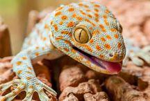 Wildlife - News / Wildlife News