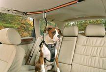 accesoriod p perros